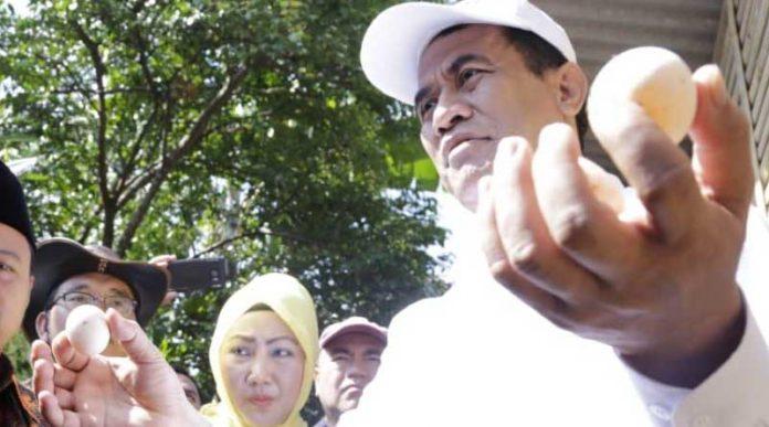 Desa Mandiri Bibit Ayam Kampung Unggul