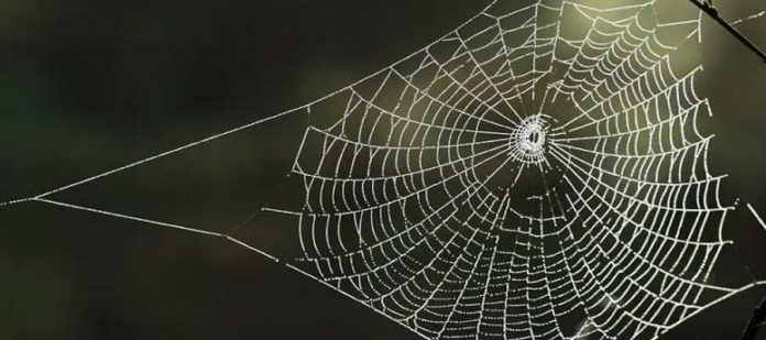 Sarang Laba-laba
