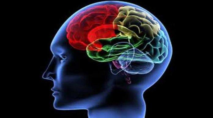 Teori Otak